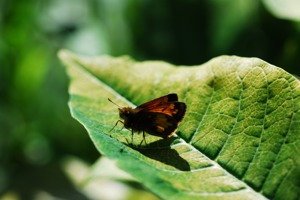 http:  www.taishimizu.com pictures Micro Nikkor 105mm f4 ais moth thumb.jpg