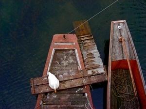 http:  www.taishimizu.com pictures boat perch nikon s10 thumb.jpg