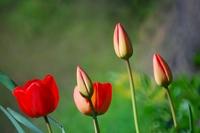 http:  www.taishimizu.com pictures reflex flowers sm.jpg