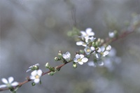 http:  www.taishimizu.com springneg DR2pass%20flowers sm.jpg