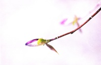 http:  www.taishimizu.com springneg Untitled 2 sm.jpg
