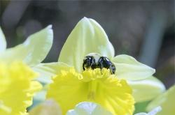 http:  www.taishimizu.com springneg bee_sm.jpg